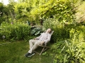 "Austria; Vienna; Swiss ""Tatort""- actor Roland Koch in his garden in Vienna"